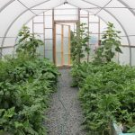 20' wide inside greenhouse