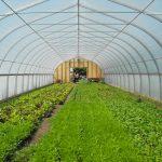 24' wide inside greenhouse
