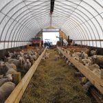 30' wide Sheep Housing